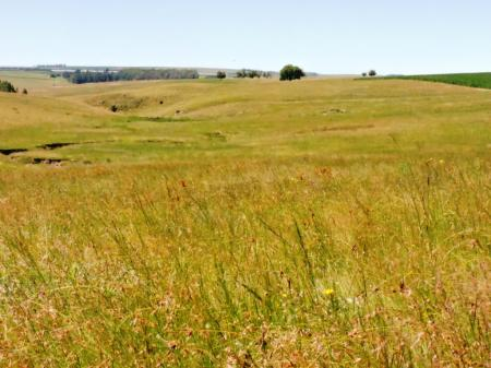 Farm, Bethlehem, Free State